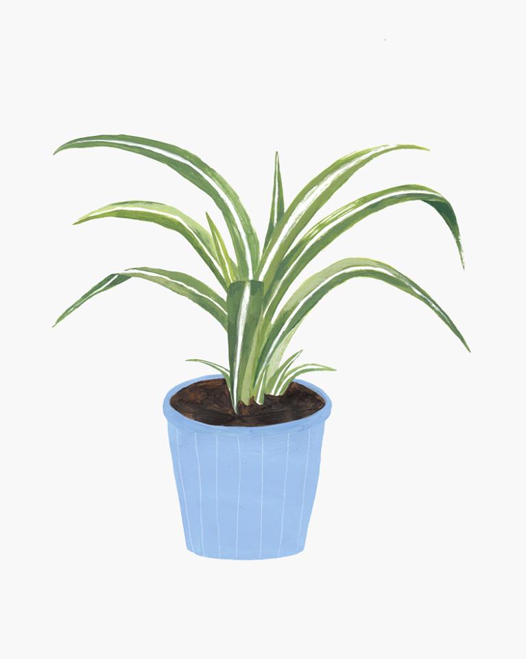 plantas hermano gato