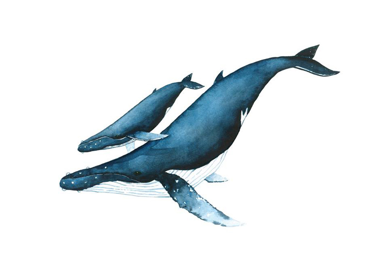 ilustracion ballenas 2