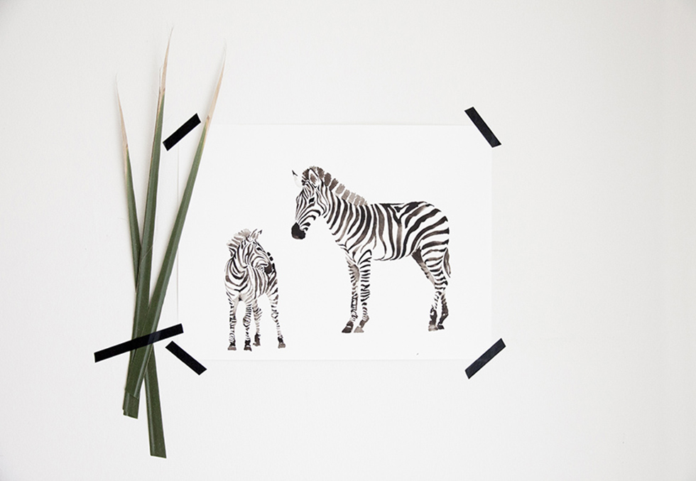 macaroom ilustracion zebra