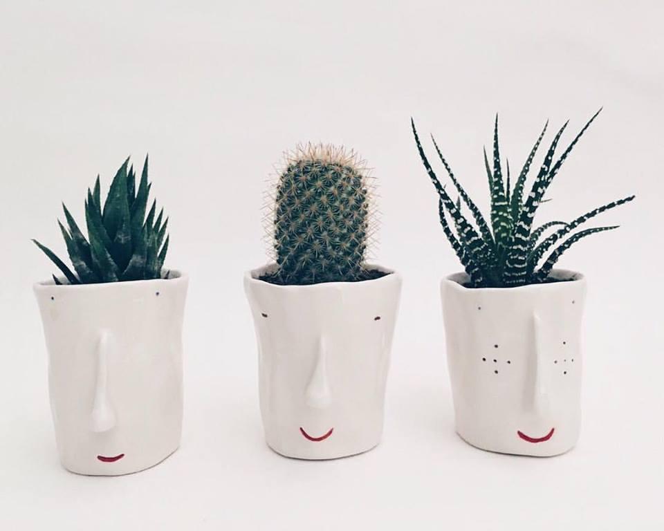 pompilio plants cactus
