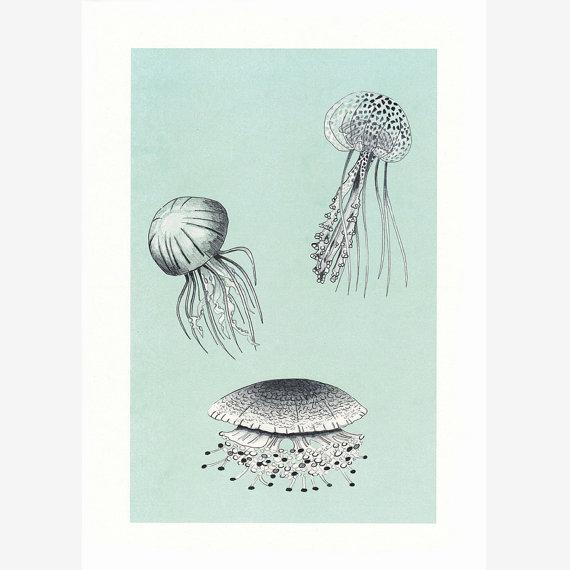 medusas-ilustracion